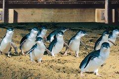 Imagen Half Day Phillip Island Penguin Parade Tour