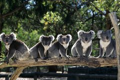 Imagen Private Melbourne Sightseeing Tour