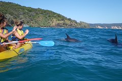 Imagen Half-Day Kayak with Dolphins and 4WD Beach Drive from Rainbow Beach