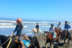 Ver la ciudad,Actividades,Tours con guía privado,Actividades de aventura,Salidas a la naturaleza,Especiales,Excursión a Valparaíso,Excursión a Viña del Mar