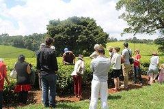 Excursion at Kiambethu Tea Farm