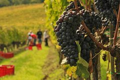Brunello and Nobile Wine Lovers Tour: Montalcino and Montepulciano
