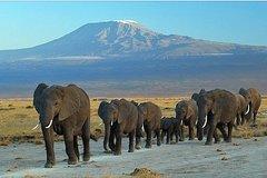 3 Day Kenya Safari