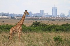Imagen Nairobi National Park, Elephant Orphanage, Giraffe Center and Karen Blixen Museum
