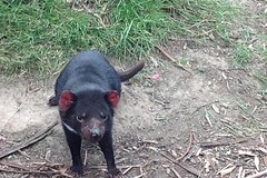 Imagen South East Food, Sightseeing Private Tour with the Tasmanian Devil Unzoo