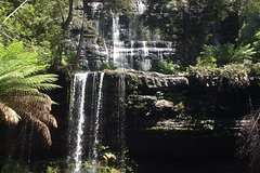 Imagen Private Mt Field National Park Day Trip from Hobart Including Salmon Ponds and Bonorong Wildlife Sanctuary