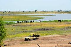 Chobe National Park Game Drive