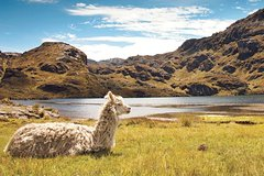 Imagen Private Day Tour to Cajas National Park from Cuenca