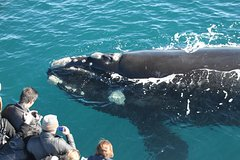 Imagen Whale Watching Cruise from Augusta