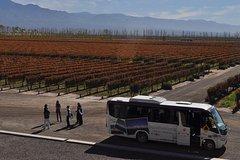 Imagen Recorrido vinícola en autobús con paradas libres en Mendoza
