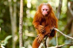 Imagen 5 Day Pacaya Samiria Reserve Tour From Iquitos