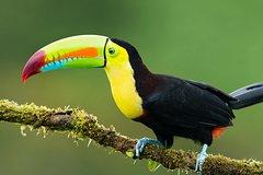 Imagen 7-Day Amazon Jungle Tour at Maniti Eco-Lodge