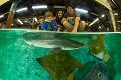 Imagen Irukandji Shark and Ray Aquarium Entry Ticket with Optional Shark Experience