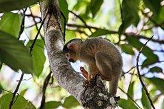 Imagen 3 days 2 nights - Tambopata Jungle