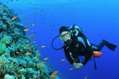 Las Palmas de Gran Canaria Canarias 2-Hour Scuba Diving Experience for Beginners 41935P217