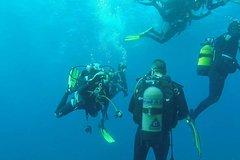 Gran Canaria Gran Canaria 2-Hour Scuba Diving Baptism in La Restinga 41935P86