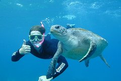 Imagen 3-Hour Sea Turtle Snorkeling Experience in Byron Bay