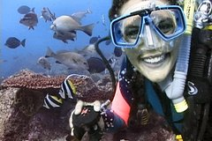 Imagen Byron Bay 3-Hour Certified Dive Tour