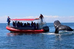 Imagen Byron Bay Whale Watching Cruise