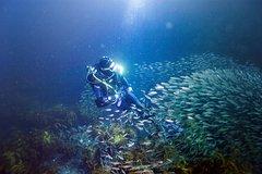 Imagen Full-Day Scuba Dive Charter to Little Barrier Island
