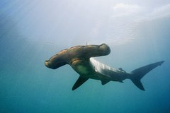 Imagen Full-Day Scuba Dive Charter: Hammerhead Experience from Warkworth