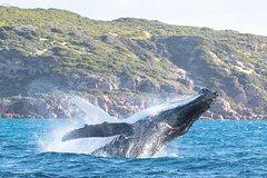 Imagen Jet Boat Whale Watching Safari from Dunsborough