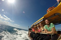 Imagen Swim with Dolphins in the Bay of Plenty with a Full-Day Tour