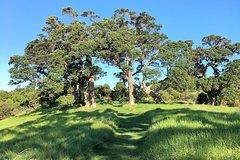 Imagen Half-Day Bush and Beach Walk on Waiheke Island