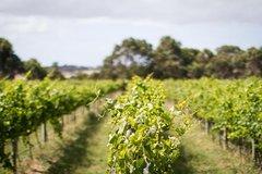 Imagen Half Day Phillip Island Wine and Beer Trail Tour