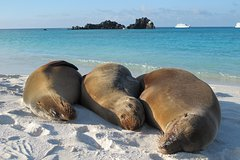 Imagen Galapagos Island 4 Days - 2 Islands : From Sand to Volcanoes