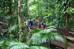 Imagen Full Day Cape Tribulation and Daintree Rainforest Tour