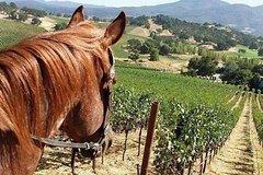 Private Napa Sonoma Wine Tour and Horseback Ride from San Francisco