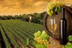 Private Custom Napa Sonoma Wine Tour from San Francisco & Half Case of Wine