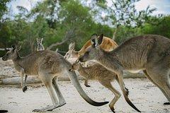 Imagen Australia Walkabout Wildlife Park General Admission Ticket