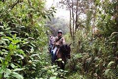 Imagen Magical Cloud Forest Horseback Riding