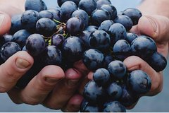 Private One Day Organic Wine & Food Tour in Chianti Classico and San Gimignano!