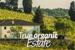 Oganic Bio Wine and Food Tour - Chianti Wine Tour in Tuscany