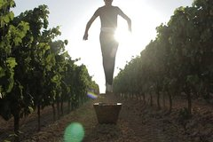 Grape Pressing Tour in Chianti - Immerse yourself in the shoes of the farmer