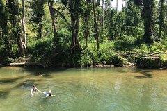 Activities,Adventure activities,Adrenalin rush,Excursion to El Yunque National Park