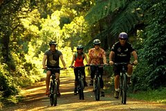 Imagen Remutaka Rail Trail Cycle Tour from Wellington