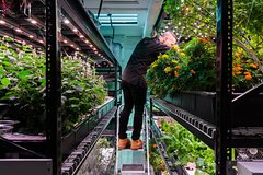 Indoor Hydroponic Farm Culinary Tour & Tasting with Prosecco