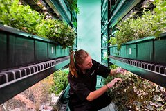 Private Indoor Hydroponic Farm Culinary Tour & Tasting with Prosecco