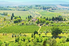 Chianti Semi-Private Cooking Class at a Tuscan Villa with Market Visit