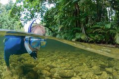 Imagen Mossman River Drift Snorkelling from Port Douglas or Mossman