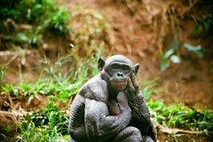 Imagen Bonobo Sanctuary Half-Day Tour (Lola Ya Bonobo)