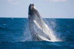 Half-Day Whale Watching and Canal Cruise from the Gold Coast