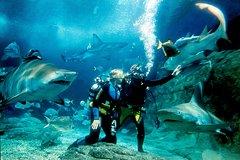 Actividades,Actividades,Actividades acuáticas,Actividades acuáticas,Adrenalina,Deporte,Acuario SEA LIFE