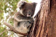 Imagen Full Day Kangaroo Island Wildlife Tour