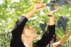 Imagen Visita de lujo de medio día con cata de vinos a Mendoza