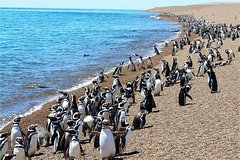 Imagen Escapada de un día a Punta Tombo